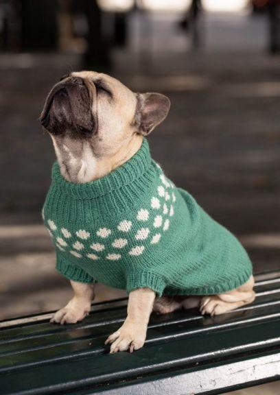 Snøballgenser til hund (Lys sjøgrønn)